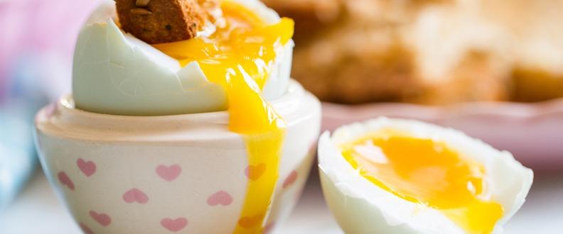 Yumurta Nedir